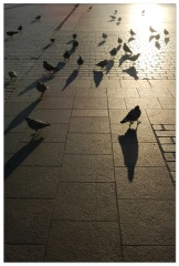 cracow_026